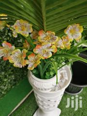 Get Beautiful Mini Flowers At Affordable Prices Today | Landscaping & Gardening Services for sale in Adamawa State, Hong