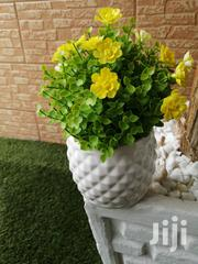 Beautify Our Home With Our Potted Flowers,Order Yours Now | Landscaping & Gardening Services for sale in Akwa Ibom State, Uyo
