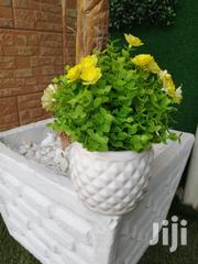 Beautify Our Office With Our Potted Mini Flowers, | Landscaping & Gardening Services for sale in Anambra State, Anambra West