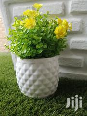 Quality Potted Mini Beautiful Flowers For Decorating   Landscaping & Gardening Services for sale in Benue State, Makurdi
