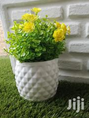 Quality Durable Potted Flowers For Sale At Low Prices Nationwide   Landscaping & Gardening Services for sale in Borno State, Bayo