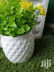 Beautiful Mini Potted Flowers For Decoration At Sales Nationwide | Landscaping & Gardening Services for sale in Borno State, Maiduguri