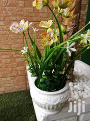 Get Beautified Pot Flowers At Affordable Prices Today | Garden for sale in Delta State, Warri