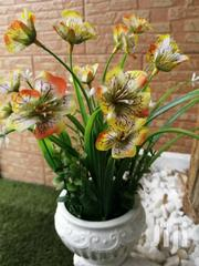 Get Durable Potted Flowers For Decoration At Sales   Landscaping & Gardening Services for sale in Ebonyi State, Abakaliki