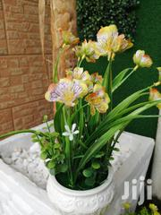 Potted Flowers For Decoration At Sales | Landscaping & Gardening Services for sale in Ebonyi State, Ezza