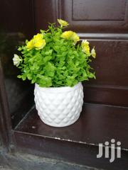 Beautified Pots Flowers For Sale | Garden for sale in Bayelsa State, Ekeremor
