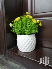 Beautified Flowers For Decorations At Sales To Re-sellers   Landscaping & Gardening Services for sale in Benue State, Apa