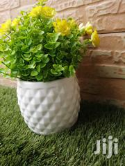 Get Beautified Pot's Flowers At Affordable Prices   Garden for sale in Osun State, Ife