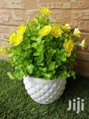 Cup Flowers For Decoration At Sales | Garden for sale in Sokoto State, Sokoto South