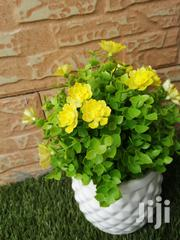 Cup Flowers For Decoration At Sales Nationwide | Garden for sale in Taraba State, Donga