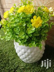 Quality Cup Flowers For Decor | Garden for sale in Taraba State, Jalingo