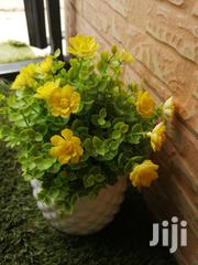 Beautiful Cup Flowers For Decor,Order Now   Landscaping & Gardening Services for sale in Yobe State, Jakusko