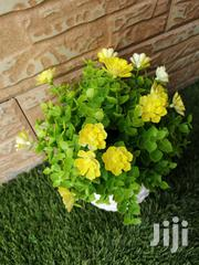 Get Decorative Cup Flowers At Affordable Prices | Landscaping & Gardening Services for sale in Zamfara State, Gusau