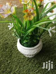 Get Decorative Beautiful Cup Flowers For Sale | Garden for sale in Abia State, Umuahia