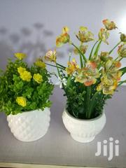 Quality Beautiful Cup Flowers For Decorations At Sales | Garden for sale in Benue State, Gwer