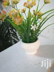 Quality Beautified Cup Flowers For Sale | Landscaping & Gardening Services for sale in Cross River State, Calabar South