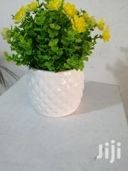 Get Quality Beautified Cup Flowers For Cheap Prices | Landscaping & Gardening Services for sale in Delta State, Ukwuani