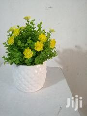 Get Our Beautiful Cup Flowers For Your Garden At Affordable Costs Now | Garden for sale in Ebonyi State, Ivo