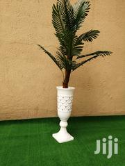 Order For Your Beautiful Tree Plants Nationwide | Garden for sale in Delta State, Sapele