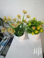Indoor Cup Flowers For Sale | Garden for sale in Jigawa State, Gwiwa
