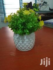 Garden Cup Flowers For Sale | Garden for sale in Kebbi State, Augie