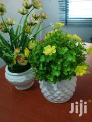 Small Cup Flowers For Sale | Garden for sale in Ondo State, Owo