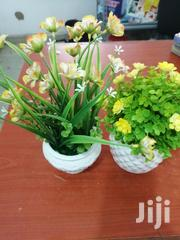 Small Cup Flowers For Sale At Best Price | Garden for sale in Osun State, Iwo
