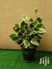 Artificial Potted Tree Branch | Landscaping & Gardening Services for sale in Rivers State, Port-Harcourt