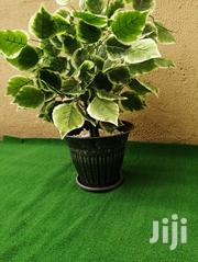 Flower Pot Decorations | Garden for sale in Rivers State, Degema