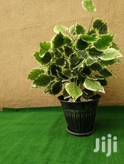 Ceramic Garden Pot   Landscaping & Gardening Services for sale in Rivers State, Emohua