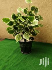 Beautiful Synthetic Pot Plants   Garden for sale in Rivers State, Ikwerre