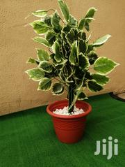 Artificial Ceramics Plants For Sale(Affordable)   Garden for sale in Abuja (FCT) State, Bwari