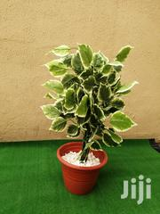 Mini House Flowing Plants | Garden for sale in Abuja (FCT) State, Guzape District