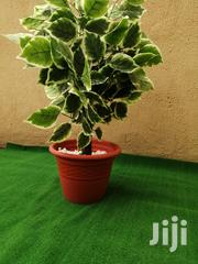 Executive Indoor Plants Pots | Garden for sale in Abuja (FCT) State, Kado