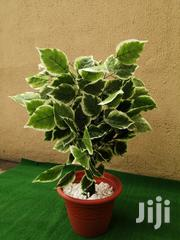 Durable Plastic Garden Pot For Sale | Landscaping & Gardening Services for sale in Abuja (FCT) State, Kubwa