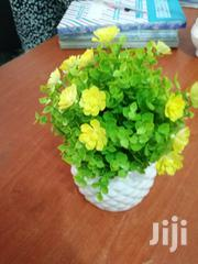 Cheap Cup Flowers For Sale To Re-sellers | Garden for sale in Anambra State, Anambra West