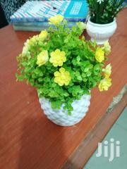 Get Beautiful Cup Flowers For Sale | Garden for sale in Anambra State, Awka North