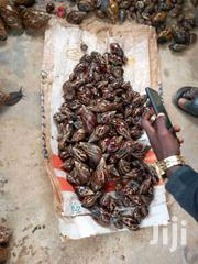 Snail For Sale (Rearing And Eating) | Meals & Drinks for sale in Lagos State, Ikeja
