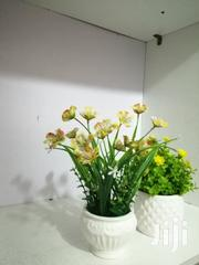 Cup Table Flowers Are Now On Sale With Huge Discount Prices   Garden for sale in Abuja (FCT) State, Bwari