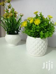 Cute Mini Cup Flowers All For Sale | Garden for sale in Lagos State, Ilupeju