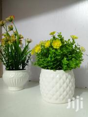 Decorative Small Cup Flowers | Garden for sale in Lagos State, Ilupeju