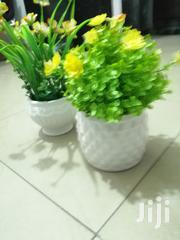 Beautiful Mini Potted Cup Flowers For Decor | Garden for sale in Anambra State, Nnewi
