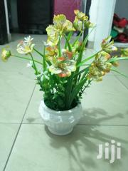 Get Beautiful Mini Potted Flowers For Decor At Sales To Re-seller | Garden for sale in Benue State, Makurdi