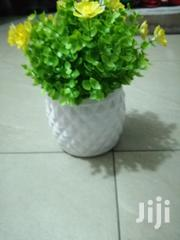 Get Your Indoor/Outdoor Mini Cup Flowers For Decor | Garden for sale in Enugu State, Nsukka