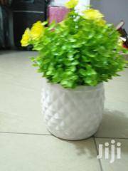 Mini Potted Cup Flowers For Decoration At Sales Nationwide | Garden for sale in Imo State, Owerri