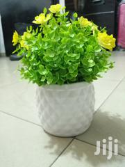 Make Beautiful Decoration With Mini Potted Cup Flowers | Garden for sale in Jigawa State, Dutse-Jigawa