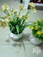 Beautiful Mini Potted Cup Flowers For Sale Nationwide | Garden for sale in Jigawa State, Taura