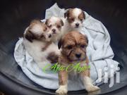 Lhasa Apso Puppies (Male Female) | Dogs & Puppies for sale in Lagos State, Magodo