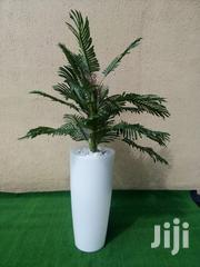Indoor And Outdoor Potted Tree | Garden for sale in Edo State, Egor