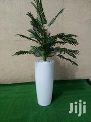 Indoor Potted Tree | Landscaping & Gardening Services for sale in Edo State, Esan North East
